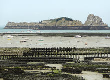 Oyster beds at Cancale Royalty Free Stock Photography