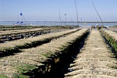 Oyster beds at Ronce les Bains Stock Photo