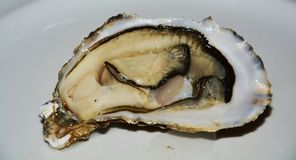 Oyster in brown hues, close up Stock Image