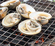 Oyster butter. On the grill Stock Photography