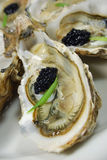 Oyster with caviar Stock Images