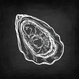Oyster chalk sketch Royalty Free Stock Photo