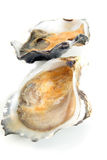 Oyster, clam or mussel Stock Photography