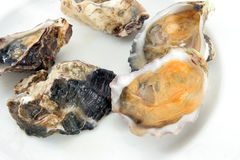 Oyster, clam or mussel Stock Images