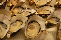 Oyster close up stock photo