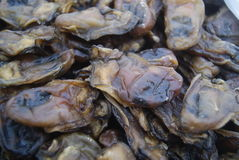 Oyster dry Royalty Free Stock Photo