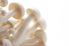 Oyster Enoki Mushrooms Stock Images