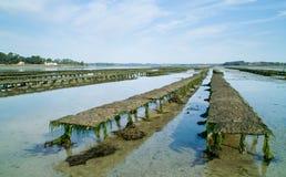 Oyster farm Stock Photography
