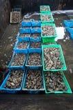 Oyster farm Royalty Free Stock Photos
