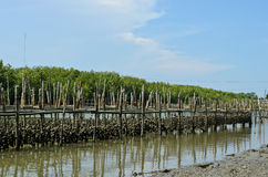 Oyster farm Stock Image