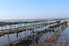 Oyster farm. Some oyster beds at the coast in England Royalty Free Stock Photo