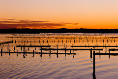 Oyster Farm Beds silhouetted by colors of sunset Royalty Free Stock Photo