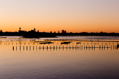 Oyster Farm Beds silhouetted by golden sunset Stock Photo
