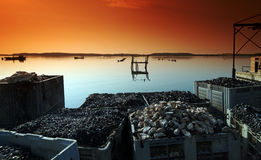 Oyster farm in corsica Royalty Free Stock Images