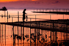 Oyster Farm. Ing, Pier of Cap-ferret in Thailand Royalty Free Stock Photos