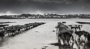 Oyster farm in  low tide in Britanny, Lilia,  France on a stormy Stock Image