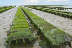 Oyster farm at low tide, Grandcamp-Maisy, France Royalty Free Stock Photos