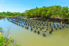 Oyster farm Stock Images