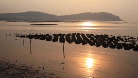 Oyster farm with sunlight reflection at Ang Sila district Royalty Free Stock Images
