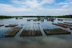 Oyster farm in thailand Royalty Free Stock Photo