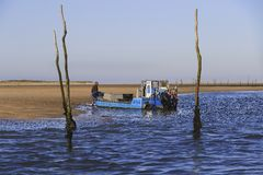 Oyster farmer Stock Image
