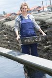Oyster Farmer Cleans Products Stock Image