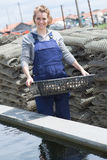 Oyster Farmer Harvesting Produce Royalty Free Stock Photo