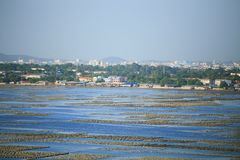 Oyster farming. Is an aquaculture (or mariculture) practice in which oysters are raised for human consumption.  most likely developed in tandem with pearl Stock Images