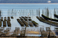Oyster farming in basin of Arcachon Stock Photo