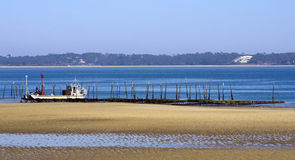 Oyster farming in basin of Arcachon Royalty Free Stock Photography