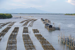 Oyster farming in cages. Stock Photos