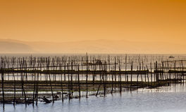 Oyster farming on the coast of cap ferret Royalty Free Stock Photo
