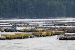 Oyster farming in the Damariscotta River, Maine, involving traps and cages. Oyster farming in the Damariscotta River involving traps, cages, boats and processing royalty free stock image