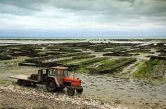 Oyster farming in France. Oyster farming at Cancale in the bay of Mont-Saint-Michel, the English Channel, Ille-et-Vilaine, Brittany, France, at low tide Royalty Free Stock Images