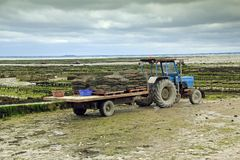 Oyster farming in France Royalty Free Stock Photo