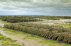 Oyster farming in France Stock Photography