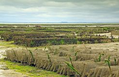 Oyster farming in France Royalty Free Stock Photos