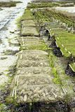 Oyster farming in France Stock Image