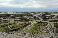 Oyster farming in France Stock Photos