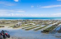 Oyster farming Stock Photos