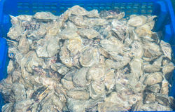 Oyster farming Royalty Free Stock Images