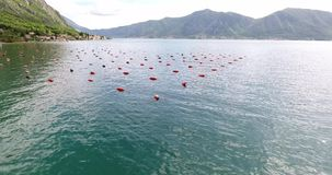 Oyster farming in Montenegro. Aerial shot of oyster and mussel farming with traps and buoys in Boka-Kotor bay, Montenegro, the Adriatic coast in the springtime stock footage