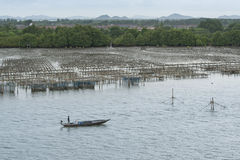 Oyster farming. Panel in the sea Stock Photography