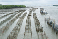 Oyster farming. Panel in the sea Royalty Free Stock Image