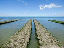 Oyster farming in table cultivation at low tide in Normandy in France stock photography