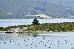 Oyster farms in a bay of the Mediterranean Sea Stock Photos