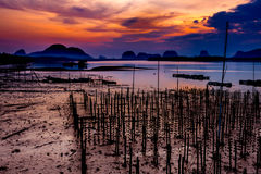 The Oyster Farms at Fisherman village at Samchong-tai, Phang Nga. Thailand Stock Photo