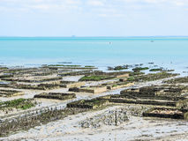 Oyster farms in lowtide, Cancale, France Royalty Free Stock Photo