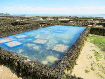 Oyster farms in lowtide, Cancale, France Stock Images