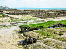 Oyster farms in lowtide, Cancale, France Royalty Free Stock Image